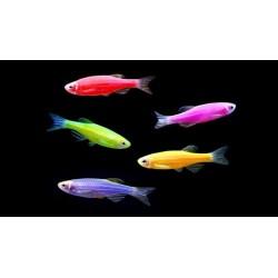 "Аквариумная рыбка ""Данио"""